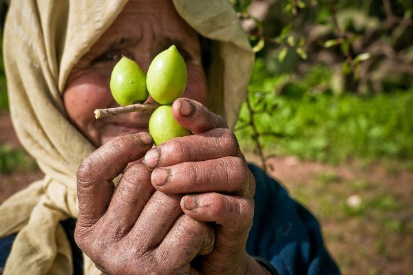 Local Berber women has an important role in the production of Argan oil in Morocco.