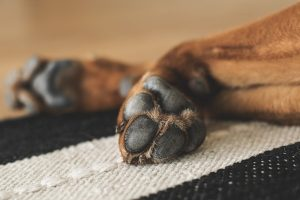 Soften and disinfect paws with Argan oil.