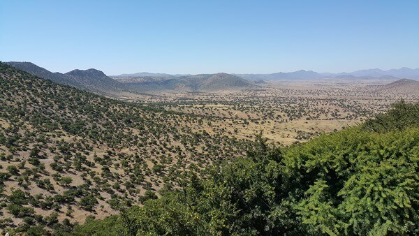 Vast forests of Argan Trees in Morocco